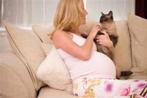 Вагітність і домашні тварини