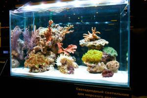 Выбор тестов для морского аквариума