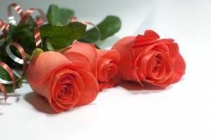 Букет троянд для матусі