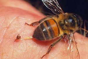 лікування бджолами